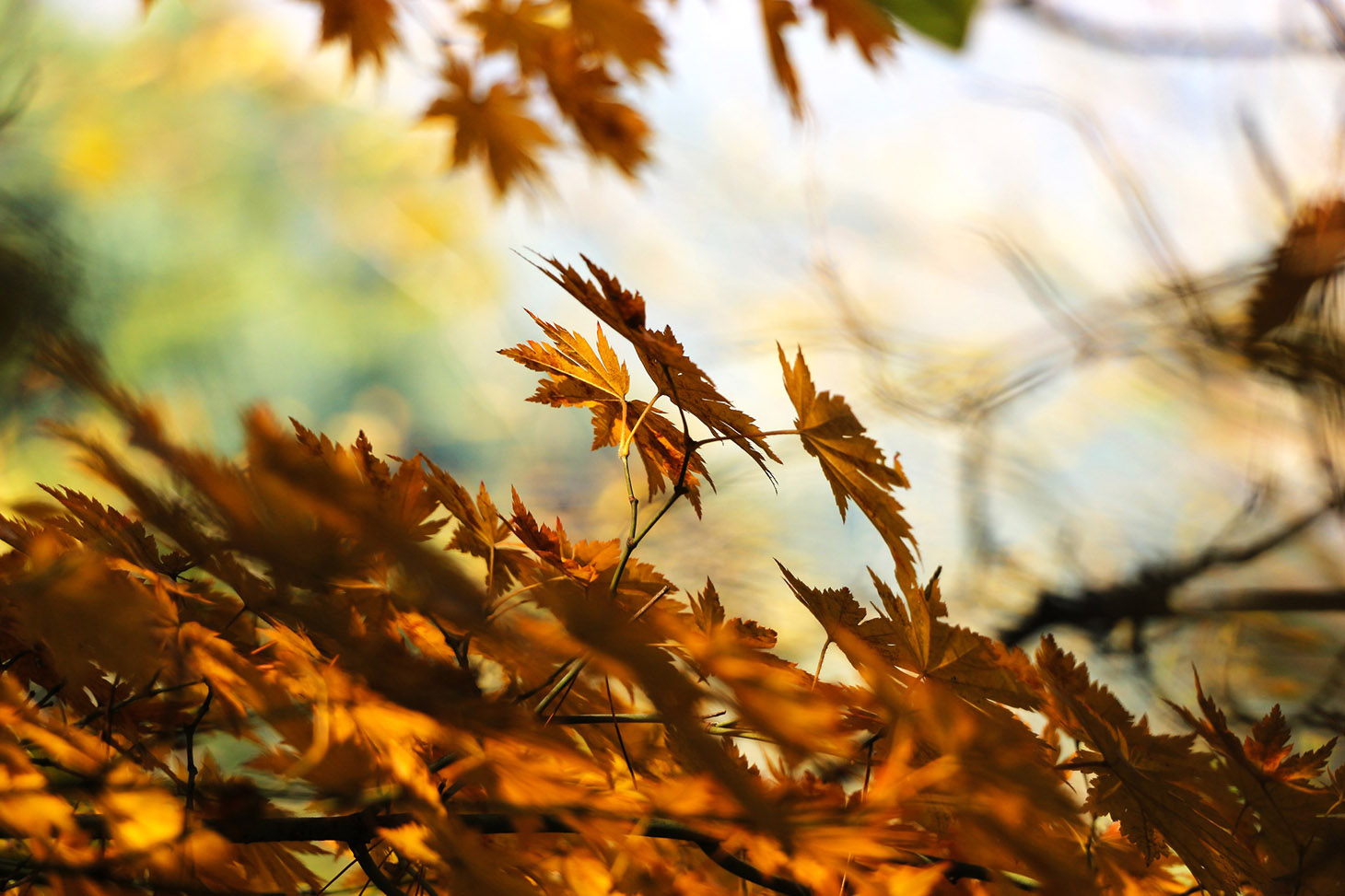 autumn-leafes
